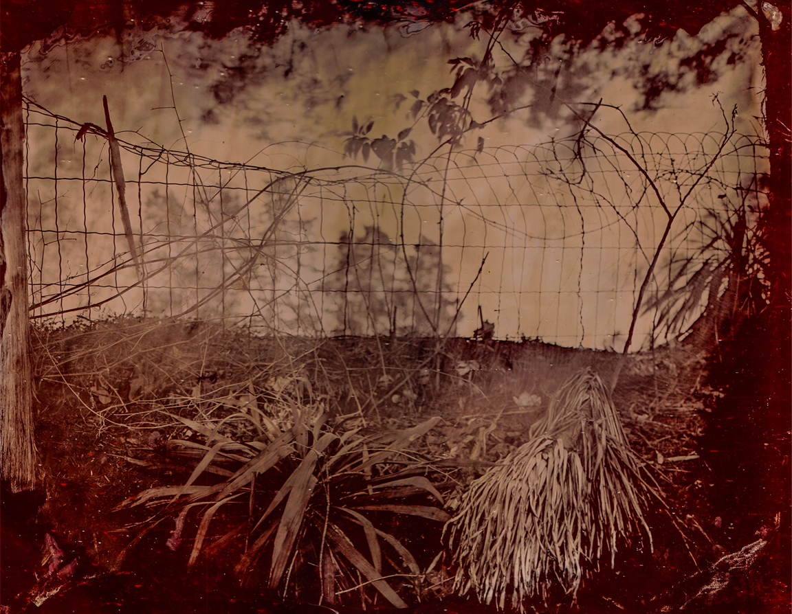"""""""Cemetery Fence"""": 11' X 14"""" red glass ambrotype made at Poplar Springs Cemetery in the Red Community near Bruce, Ms., (Calhoun County) in April of 2012."""